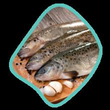 ماهی قزل آلا پاک شده با سر زی خوراک